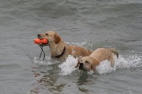 plaża pies morze gdzie z psem nad morze