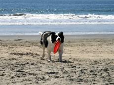 gdzie z psem nad morze, pies na plaży
